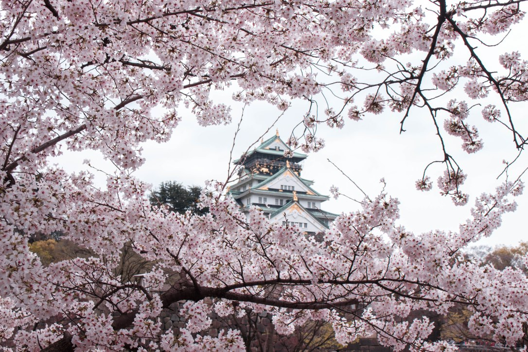 Osaka Castle with Sakura