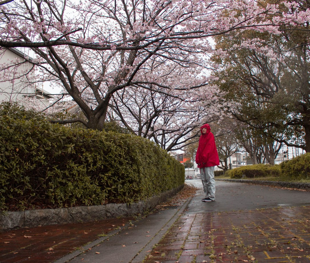 Takasago with Cherry Blossoms